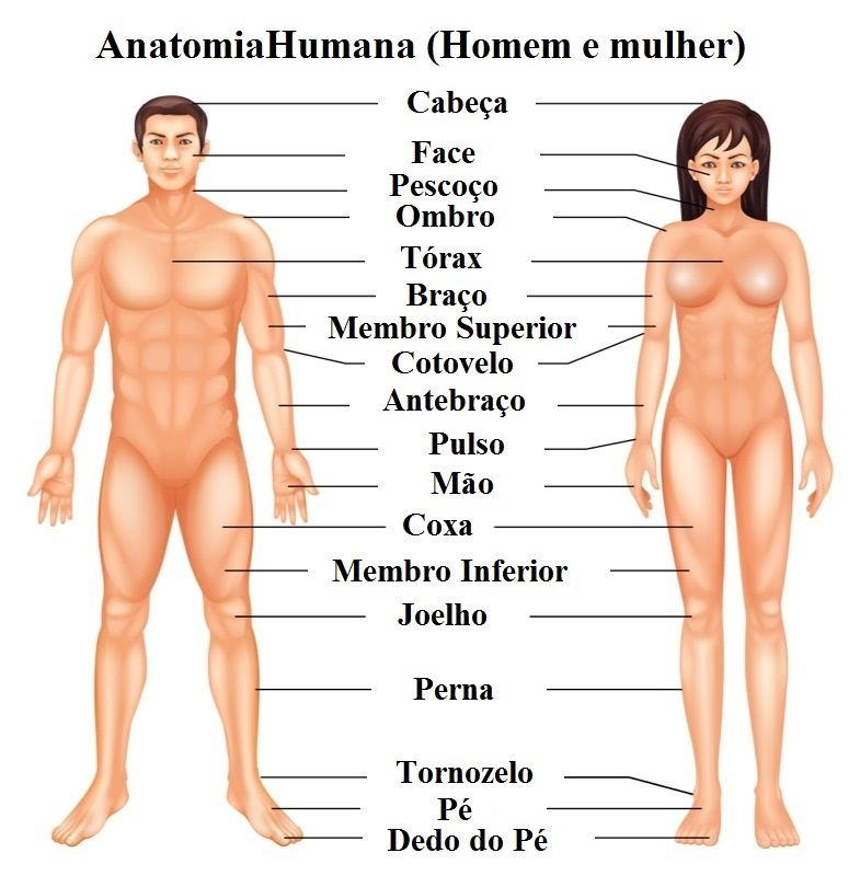 corpo-humano.jpg
